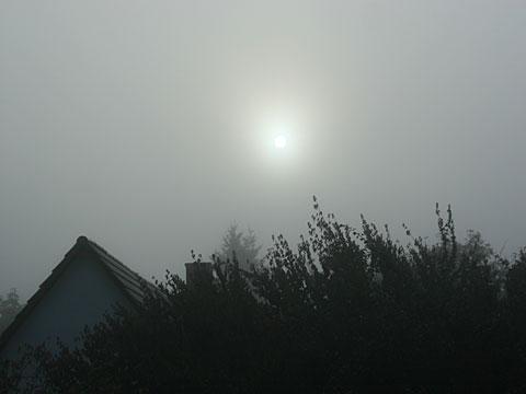 Fog in the Morning 01