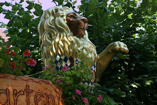 Watching Lion 12