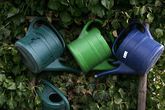 Watering Cans and Ivy 02