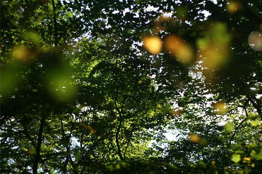 The last Summer Leaves