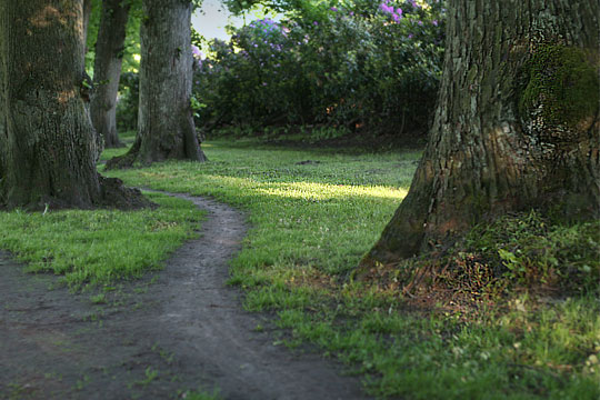 Walk through Linden