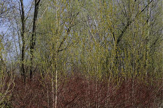 Brushwood 01