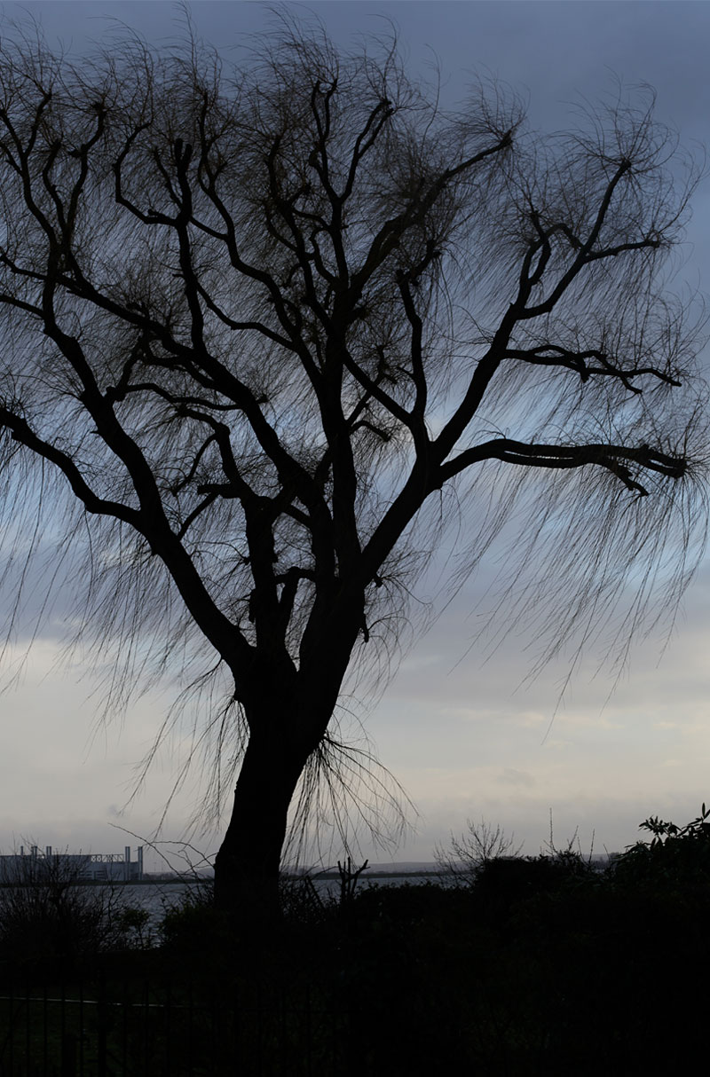 Black tree in the Storm