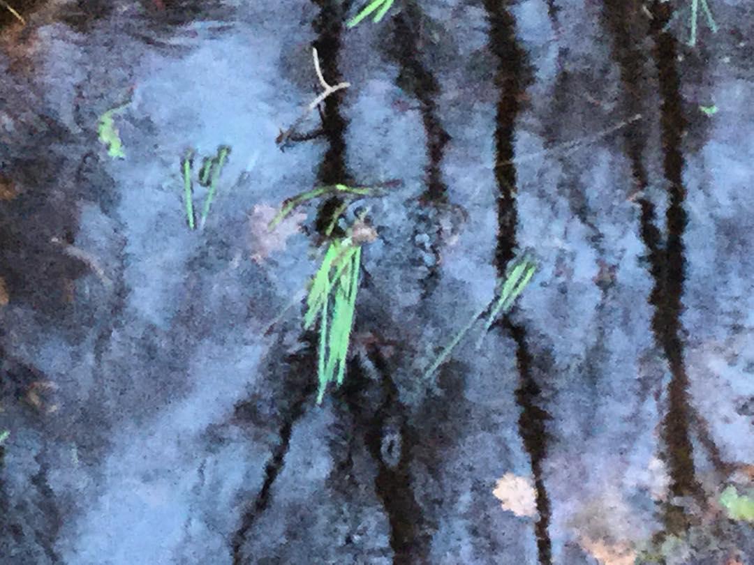 Little River in the Moor