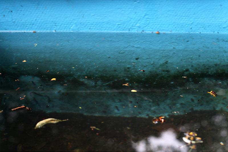 Blue Water 05