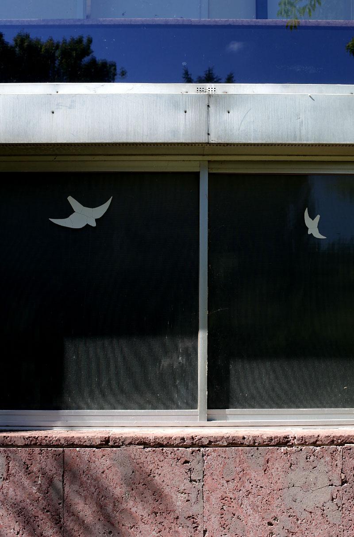 Flying Birds } } }