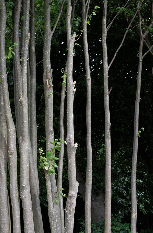 Trees Gradient