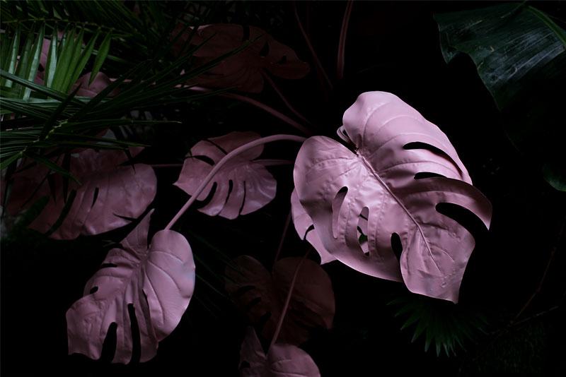 Purple Plant 02